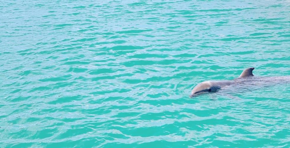 イルカちゃん